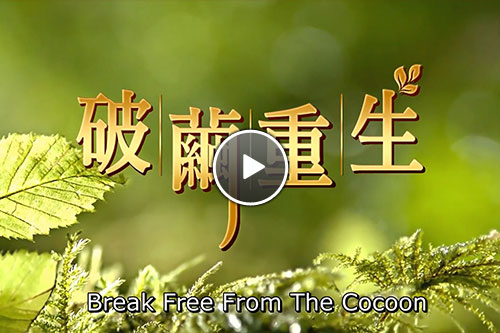 break-free-from-the-cocoon